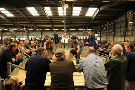 NSA Ram Sales in East and South West continue despite Covid constraints