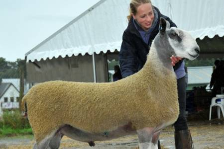 Excellent trade for pedigree rams at NSA Wales and Border Sale