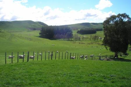 NSA urges retailers to look after UK sheep farmers as supplies of New Zealand lamb tighten
