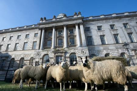 Sheep steal the show in central London