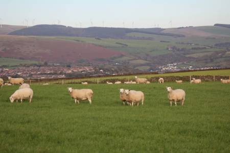 NSA Cymru/Wales responds to Welsh Governments' call for views on legislative framework supporting Welsh Agriculture
