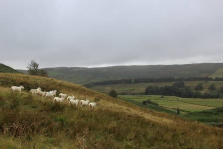 NSA Cymru calls for reassurance from Government on future farm support
