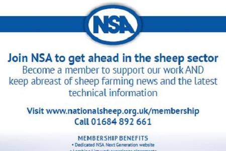 Join NSA as an U27 member to get ahead in the sheep sector