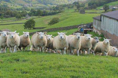 NSA welcomes positive tone of Welsh Government future farming response