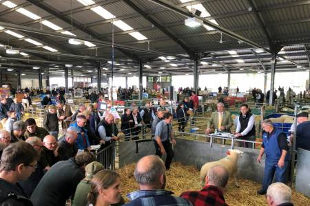 Hard decision made to cancel Wales and Border Ram Sale