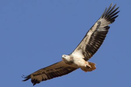 NSA launches UK-wide survey to capture farmer views on sea eagle release