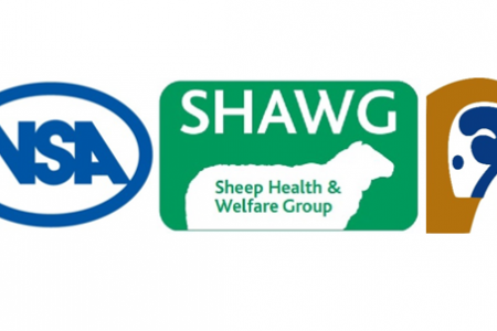 Sheep industry on awards shortlist for progress made on responsible use of antibiotics
