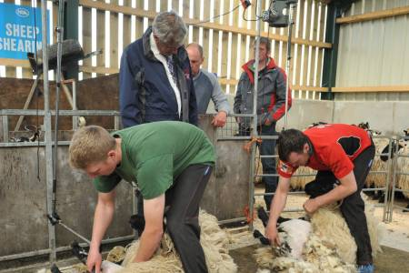 Joint Industry Guidance on Sheep Shearing