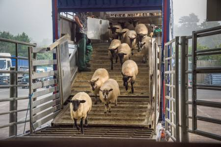 NSA needs you to have your say on Defra consultation on Improvements to Animal Welfare in Transport