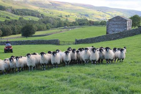 NSA and British Wool unite to bring positive messages to Scottish sheep farmers