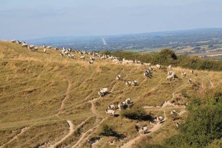 US negotiations offer new routes for UK sheepmeat – provided standards are protected, says NSA