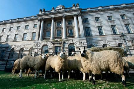 Sheep in the UK