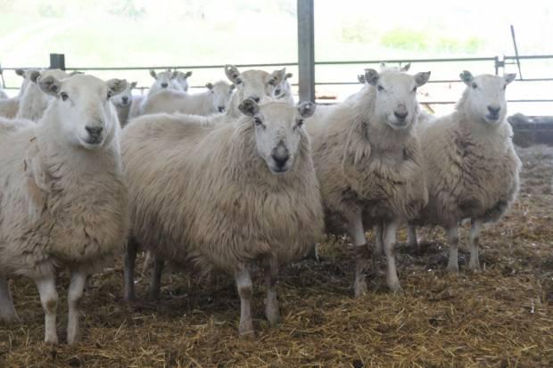 NSA Welsh Sheep 2017 Final Report