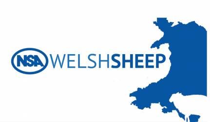 NSA Welsh Sheep 2023