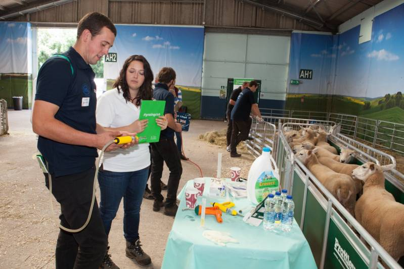 Calculating and administering correct amounts of drench and vaccine in the Young Shepherds competition