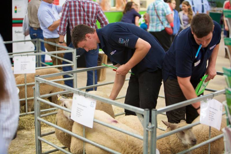 Condition scoring lambs in the young shepherd of the year competition