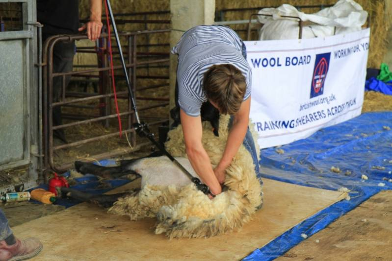 Shearing as part of the Shepherd of the Future Competition at NSA South Sheep 2014.