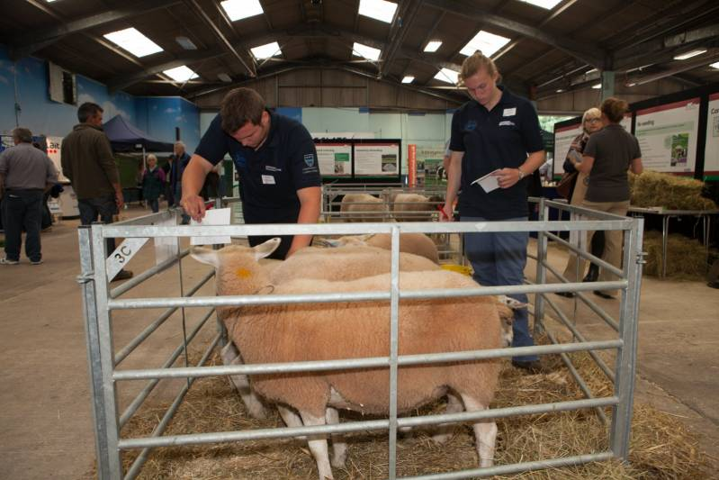 Stockjudging in the NSA Young Shepherd of the Year final at NSA Sheep 2016