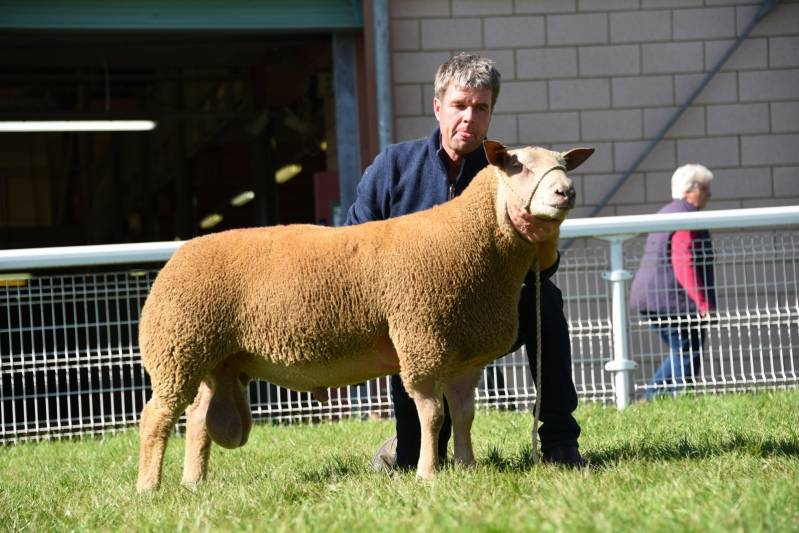 Lot 3252 from T H Roberts 2500gns