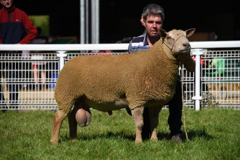 Lot 3253 2600gns from T H Roberts