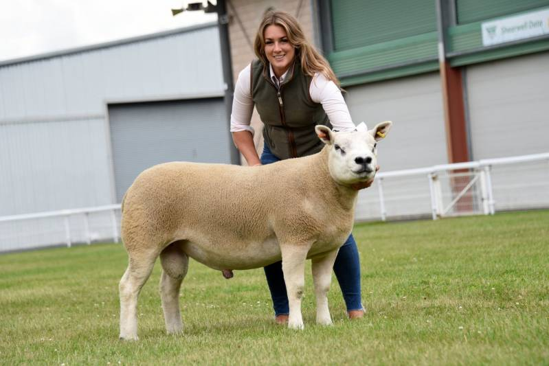 Lot 229 from Dona Williams Blacket House. Joint top price Texel at 1400gns