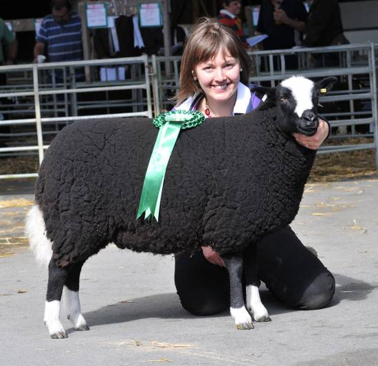 Early Sale Gallery Nsa Wales And Border Ram Sales