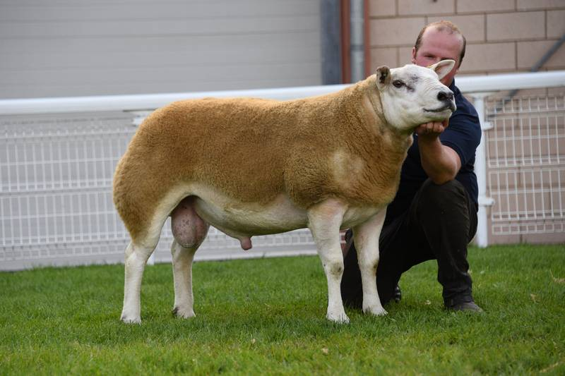 Lot 2823 Champion Texel 6,000 gns Bruce a& Gregor Ingram