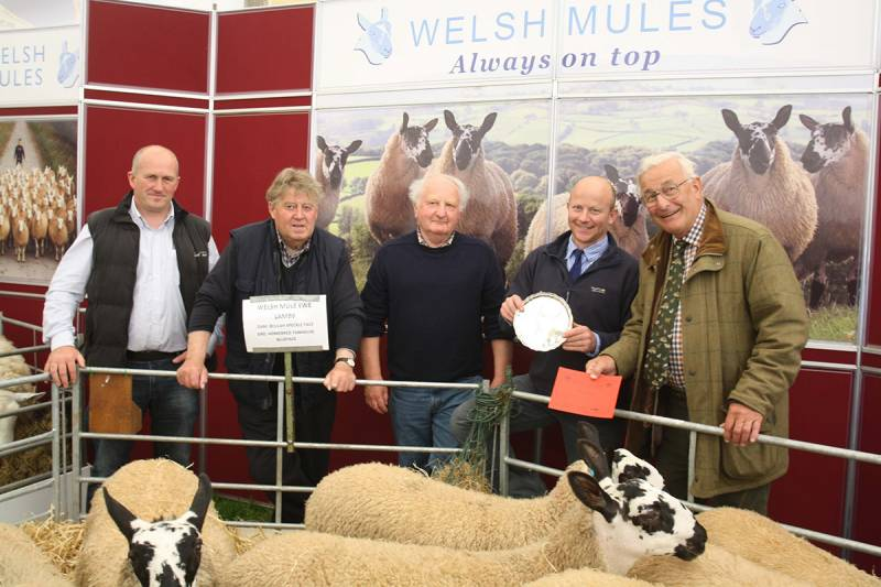 Winners of breed society competition, Welsh Mules + judge John Wakeham