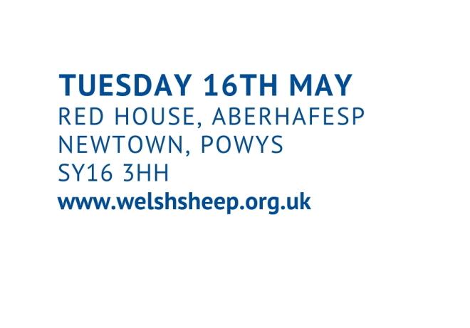 NSA Welsh Sheep
