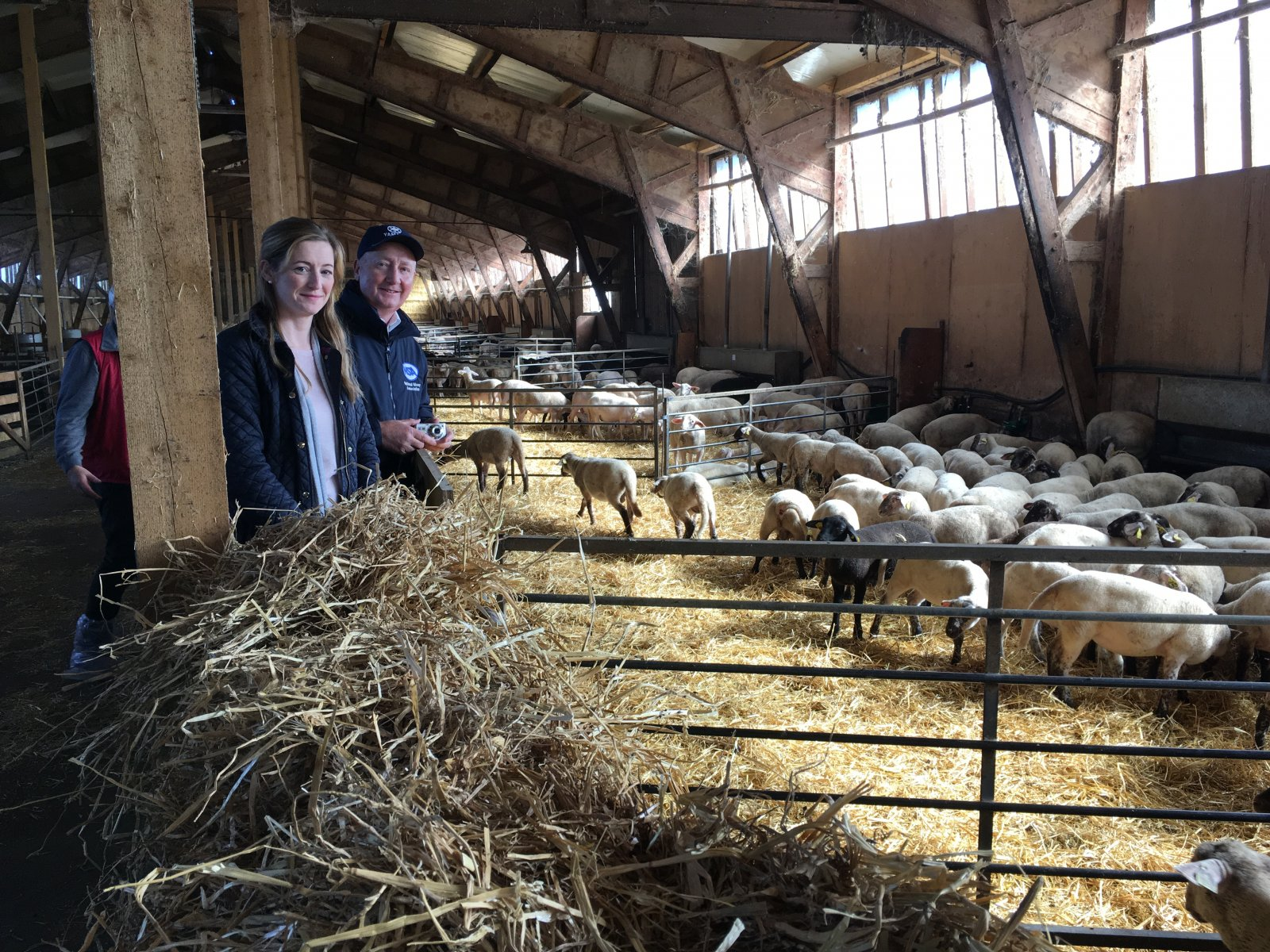 Eileen McCloskey and John Blaney inspect sheep at Du Mourier Farm