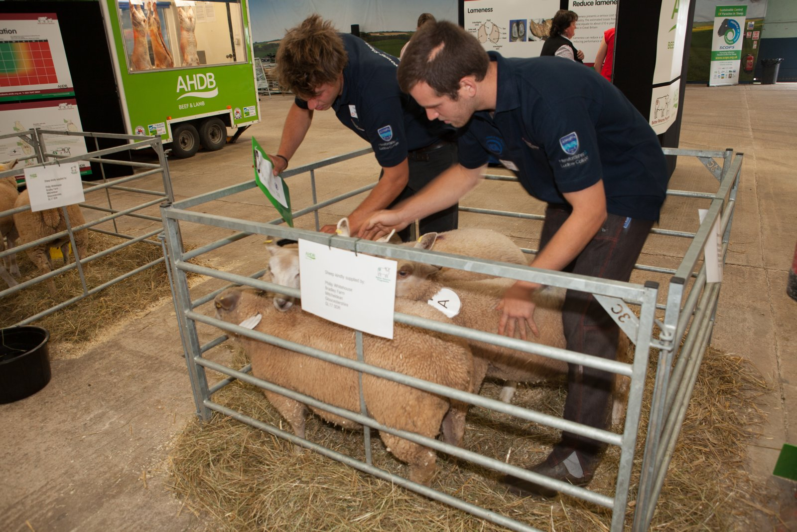 Condition scoring was the surprise element in the Young Shepherd of the Year competition in 2016