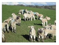 Dictionary Corner | National Sheep Association