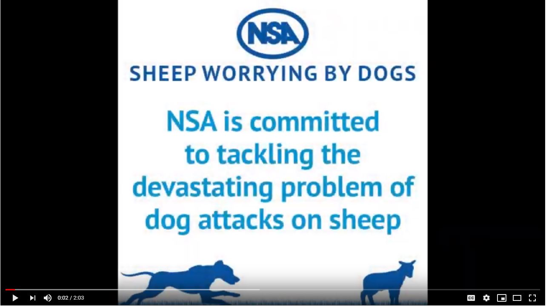 Sheep Worrying | National Sheep Association