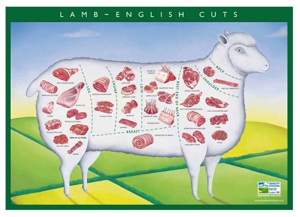 Lamb Vs Chicken Vs Beef Dog Food